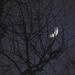 Mysterious Moon Shot