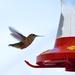 Return Of The Hummingbirds