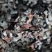 Macro Lichen Abstract