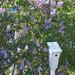 Lilac Bird Sanctuary