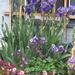 Garden Shed Flowerbed