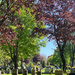 Spring at Laurel Hill Cemetery