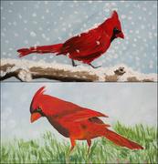 18th May 2021 - cardinals