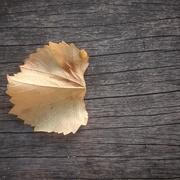 19th May 2021 - Fallen leaf