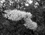 19th May 2021 - Mono Blosssom