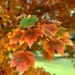 It is autumn  by sugarmuser