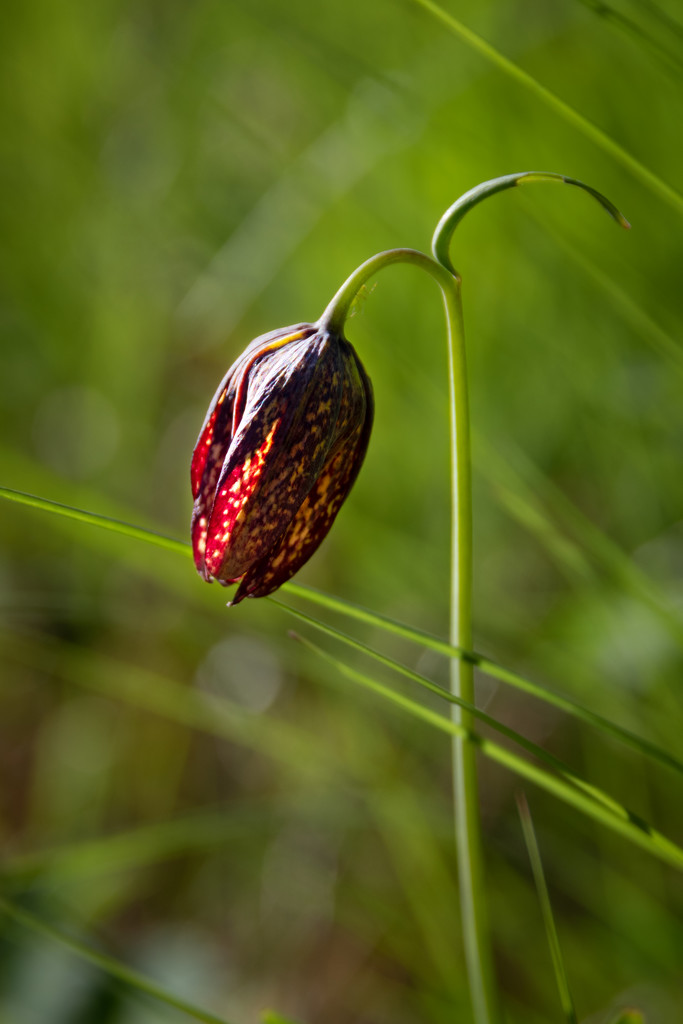 Leafy flower by teriyakih