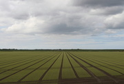 20th May 2021 - Straight lines.
