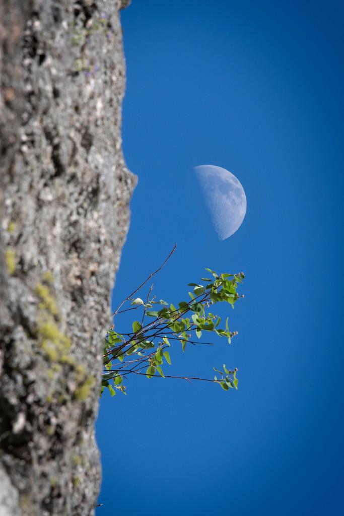Like the moon on a bright sunny day by teriyakih