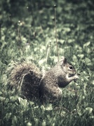 13th May 2021 - Squirrel