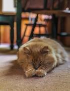 18th May 2021 - Sleepy Kitty
