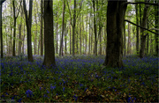 20th May 2021 - Sherwood Forest