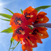 Crown Imperial 2 by sprphotos