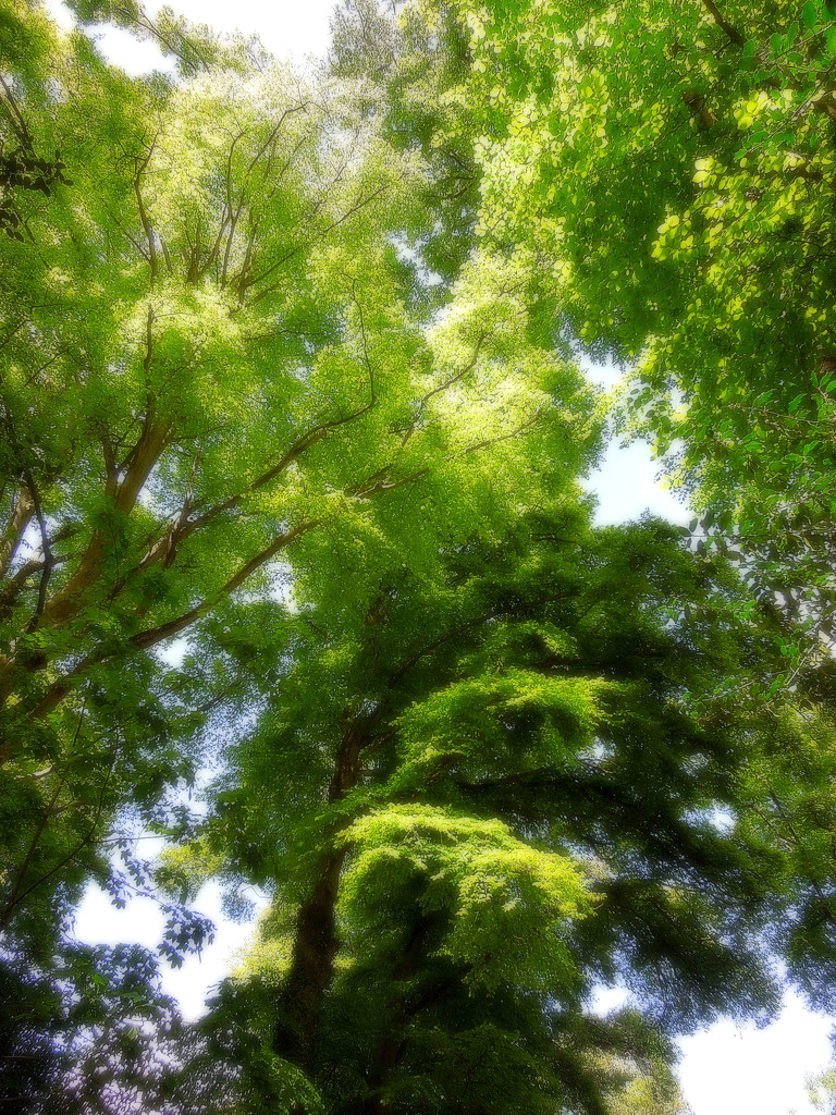 Fuzzy greens by etienne