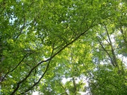 23rd May 2021 - Under the green canopy...