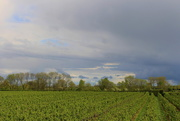 22nd May 2021 - View on an orchard