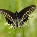 Hooray - Found My First Butterfly by milaniet
