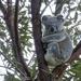 sudden wake up by koalagardens