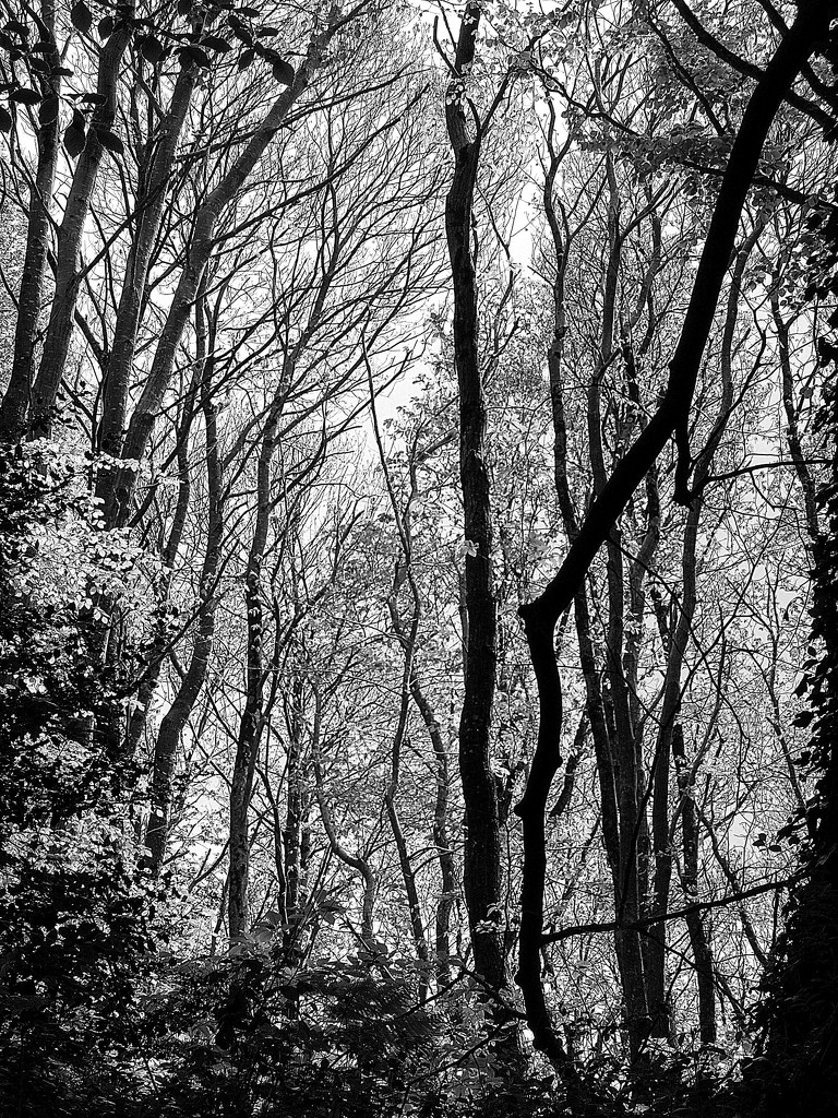 Spring in the beech woods by etienne