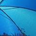 Thru the Patio Umbrella (2)
