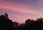 24th May 2021 - Pink Morning