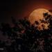 Super Flower Blood Moon by lesip