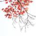 Autumn maple by maureenpp