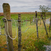 Fence by cdcook48