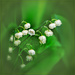 lily of the valley by jernst1779