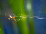 26th May 2021 - The hunter and his web