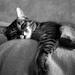 nap on dad's lap by parisouailleurs