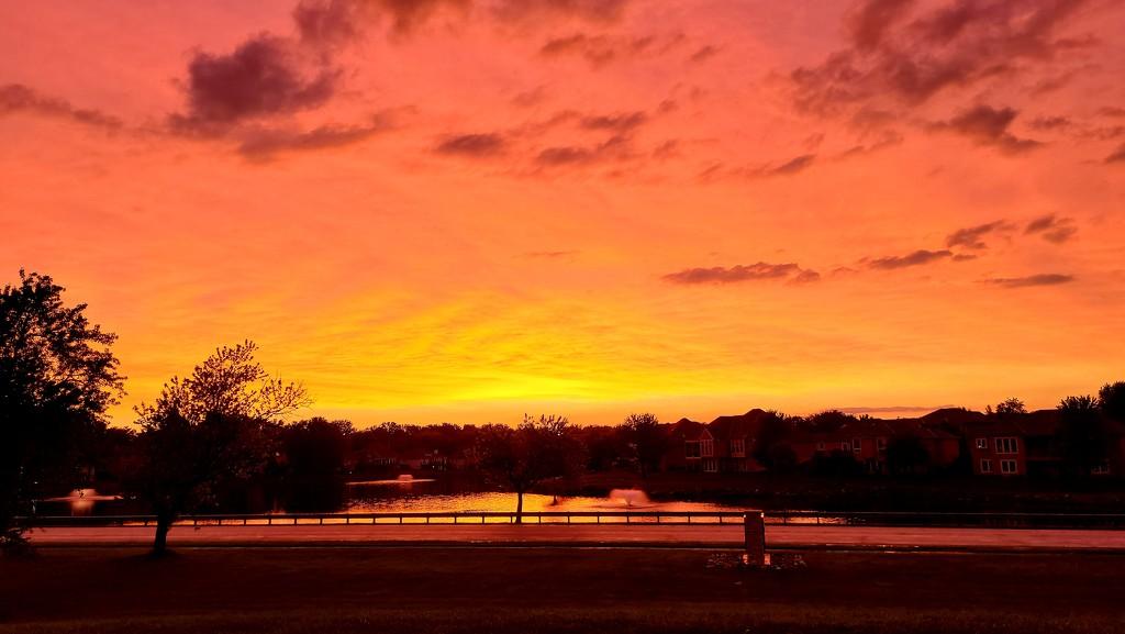 Orange Colors at Sunset by photograndma