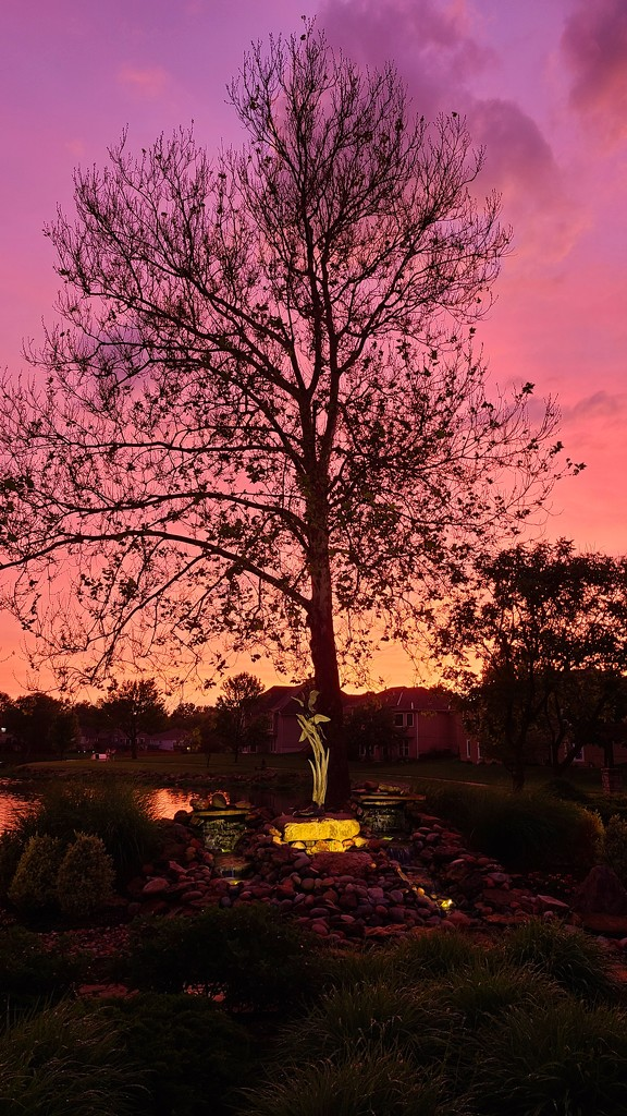 Tree in the Sunset by photograndma