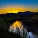 Bosque del Apache Sunset by cwbill