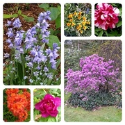 28th May 2021 - Spring flowers