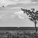 Bird Flies, Boat Sails, Tree Just Stands There