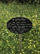 28th May 2021 - No Mow May