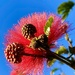 My favourite tree and flower. It just keeps giving.  by johnfalconer