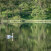 Swan lake by helstor365