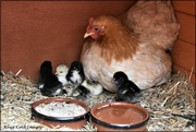 29th May 2021 - Blondie with her little ones