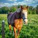 Friendly horsse-