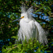 Amazing plumage! by photographycrazy