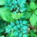 Green leaves art