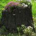 Tree stub  by okvalle
