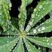 Rainy Day Droplets