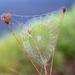 Cobweb by yorkshirekiwi