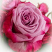 Anniversary roses......