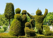 31st May 2021 - Topiary family