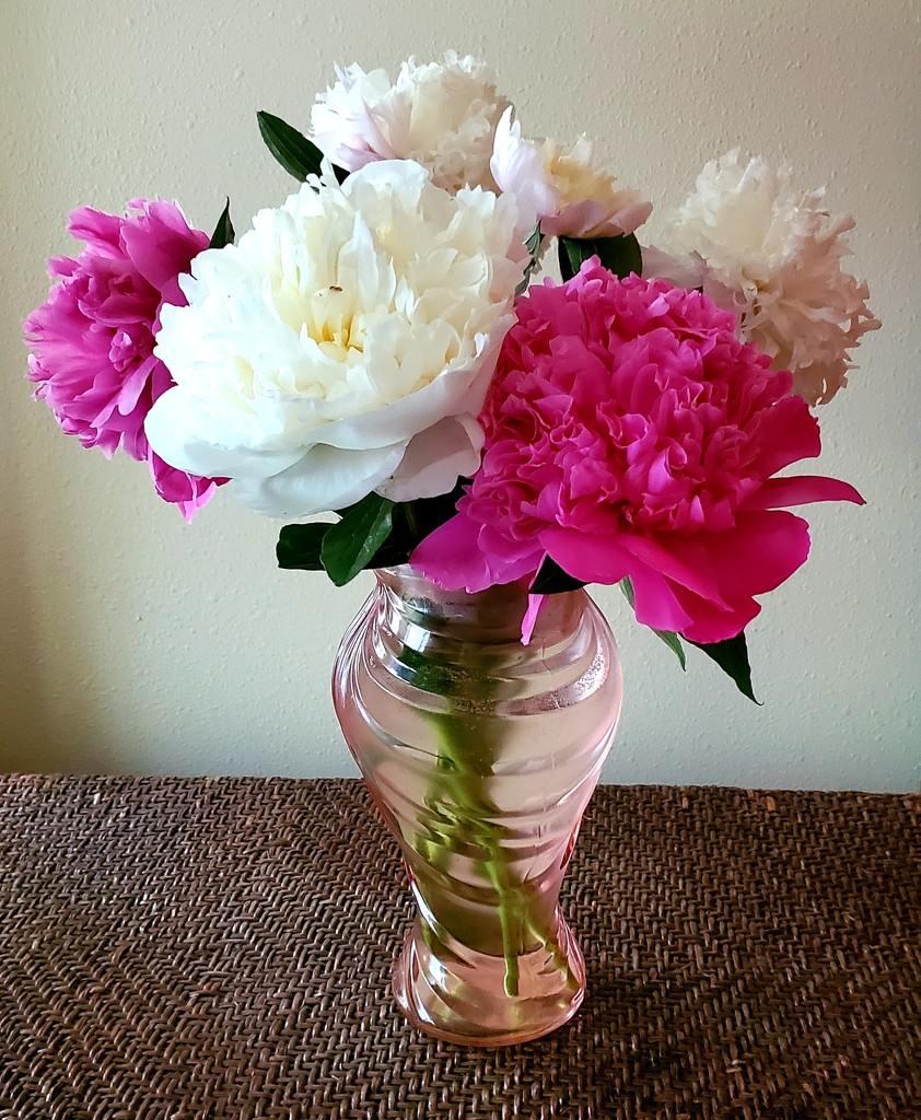 My first peony bouquet of the year. by shesnaps