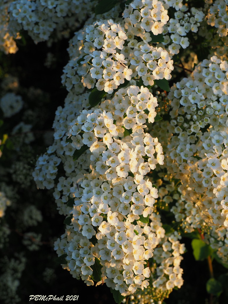 Tiny Flowers  by selkie